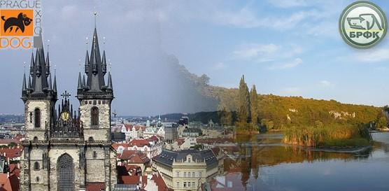 26 октября - 3 ноября Болгария, Плевен - Чехия, Прага 4xCACIB / ShowLeader (Шоулидер) - поездки с собаками
