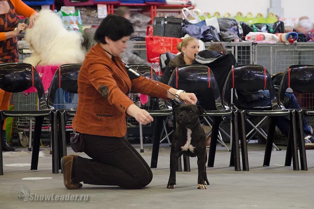 Triple Thrust Harmutti Gross Profit - Бельгия, Кортрейк 2xCACIB 50th EURODOGSHOW/ ShowLeader (Шоулидер) - поездки с собаками на выставки