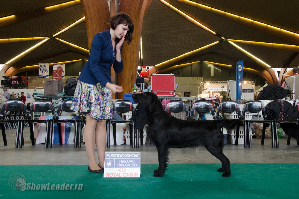 Bersifjor All You Need is Love - Бельгия, Кортрейк 2xCACIB 50th EURODOGSHOW/ ShowLeader (Шоулидер) - поездки с собаками на выставки