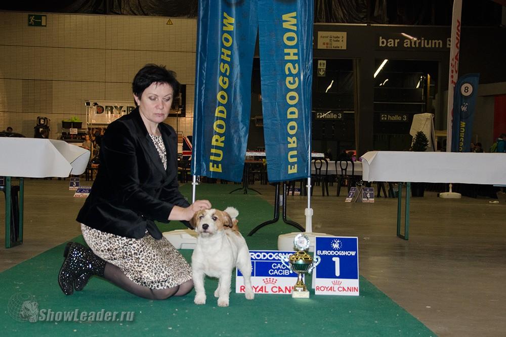 Paddington V. Paradise Of Wind- Бельгия, Кортрейк 2xCACIB 50th EURODOGSHOW/ ShowLeader (Шоулидер) - поездки с собаками на выставки
