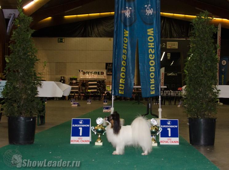 LAV-IMIDG ESTEL ELIT- Бельгия, Кортрейк 2xCACIB 50th EURODOGSHOW/ ShowLeader (Шоулидер) - поездки с собаками на выставки