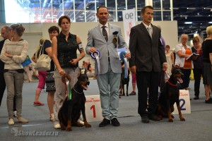 Доберманы на World Dog Show 2014 Хельсинки (Финляндия) 8 августа 2014
