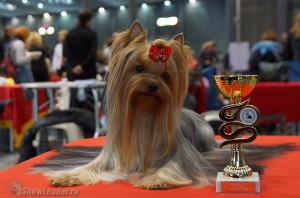 Euro Dog Show 2014 (Brno, Czech Republic) 23-26.10.2014