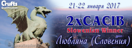 21-22 января 2017 2xCACIB Любляна (Словения)<br>Квалификация на Крафт, Slowenian Winner