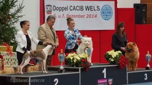 2xCACIB Вельс (Австрия) 6-7 декабря 2014