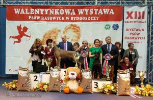 11-19 февраля 2017 2xCAC + 3xCACIB + Клубные выставки Быдгощ (Польша) - Будапешт (Венгрия)